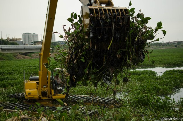 Excavator dredges Pluit reservoir of hyacinth plants, an invasive weed